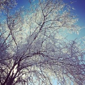 Photo of a frosty tree in Saint Cloud, MN.